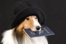 chien-en-voyage